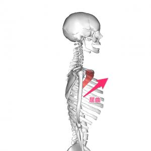 大胸筋鎖骨部屈曲