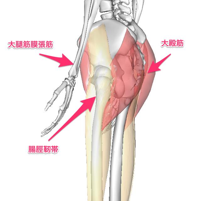 image-3-9 大殿筋と大腿筋膜張筋は内旋と外旋という反対の作用を持ちますが、その走行...